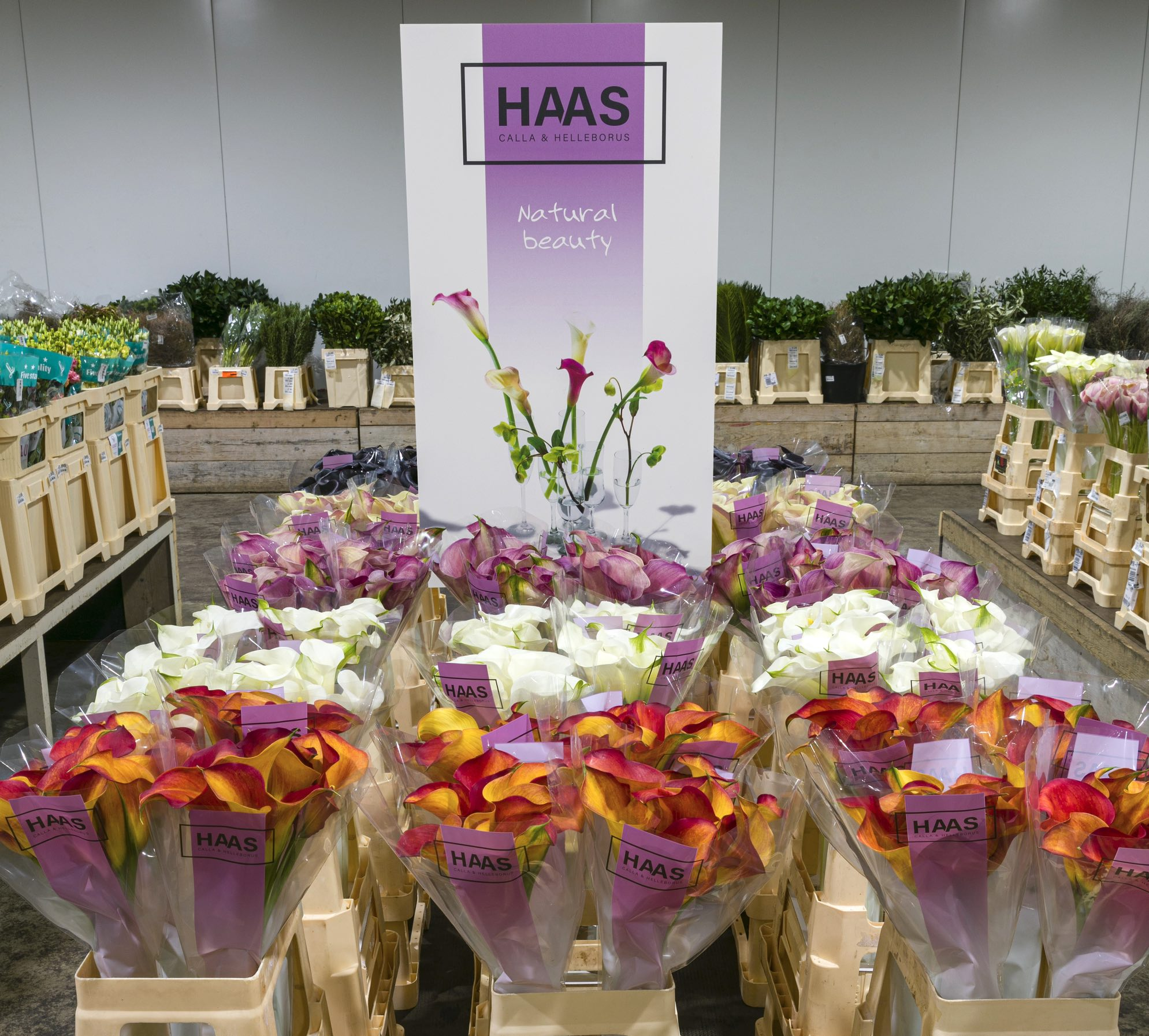 Haas C&C presentatiekit_zoom